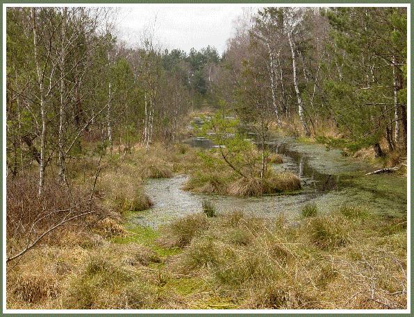 Moorlandschaft bei Hörbach