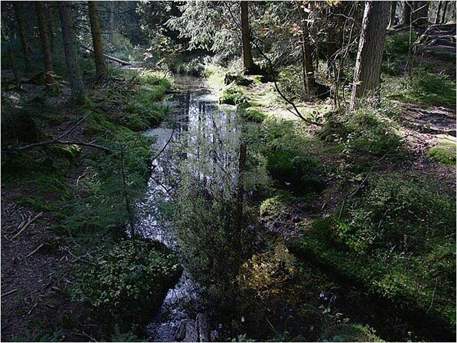 Moorlandschaft im Jura
