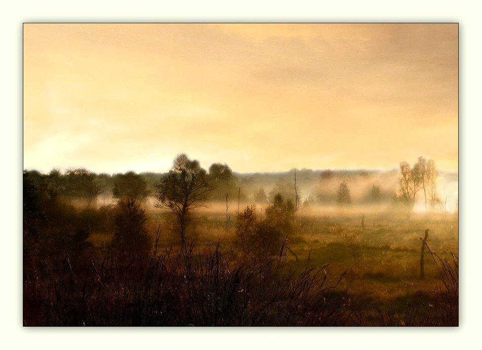 Moorlandschaft im Morgen(licht)nebel