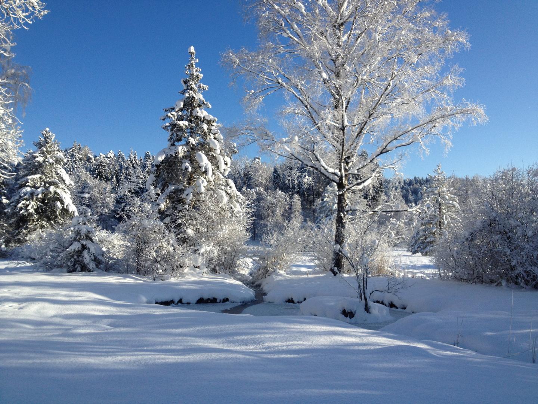 Moorlandschaft im Winterkleid