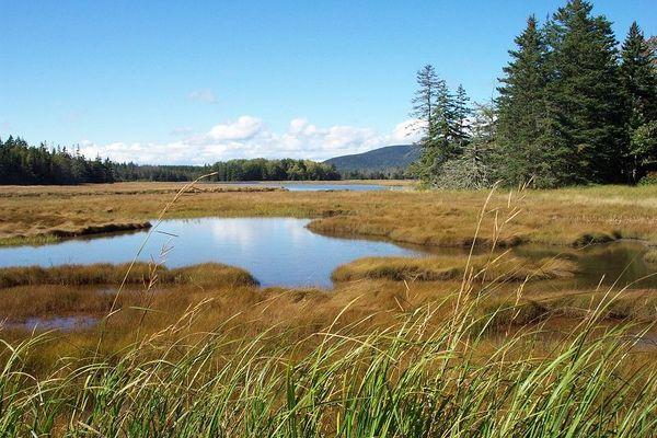 Moorlandschaft in Acadia