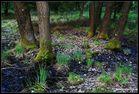 Moorlandschaften (1)
