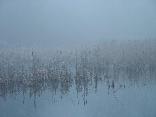 Moorweiher im Dezembermorgen