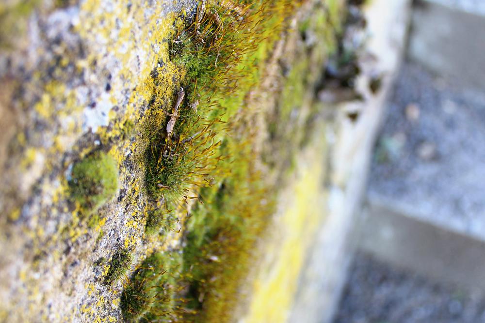 Moos an Wand