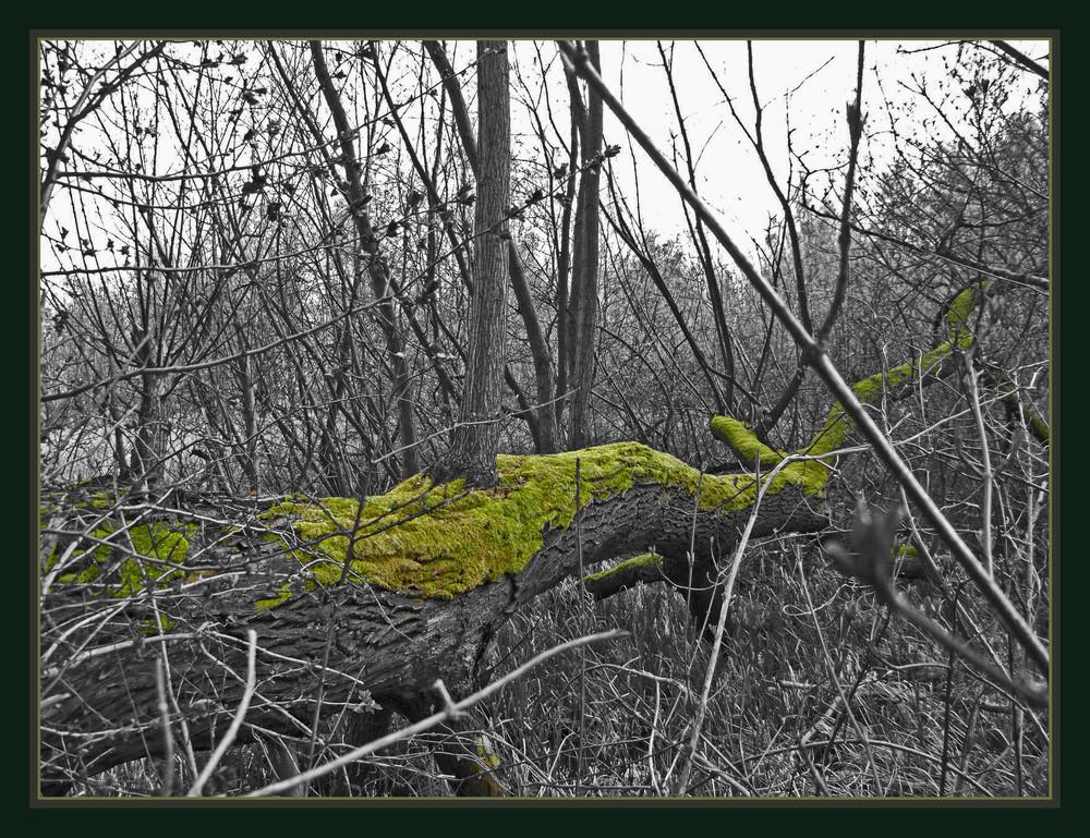 Moos auf Baum