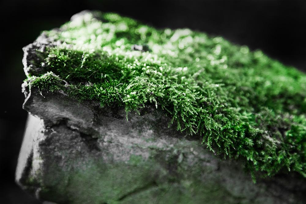 Moos auf Stein