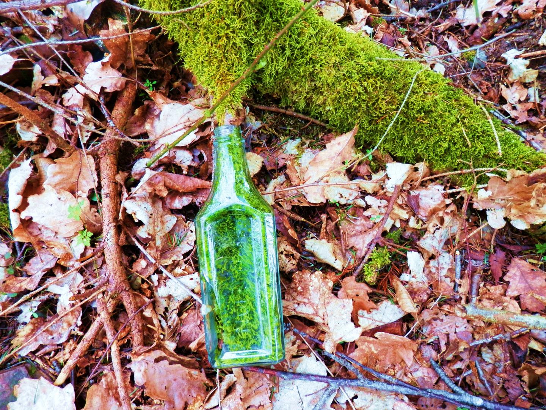 Moos in Flaschen