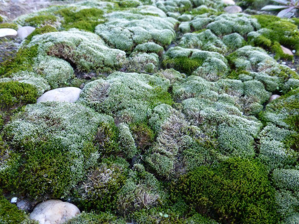 Moos landschaft foto bild pflanzen pilze flechten for Moos bilder pflanzen