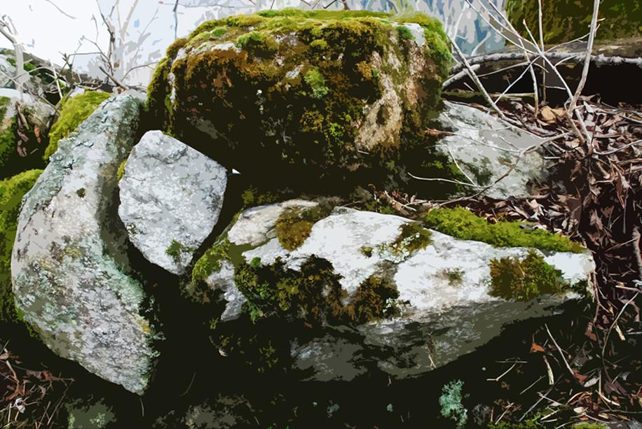 Moos und Steine