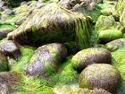 Moosbedeckte Steine
