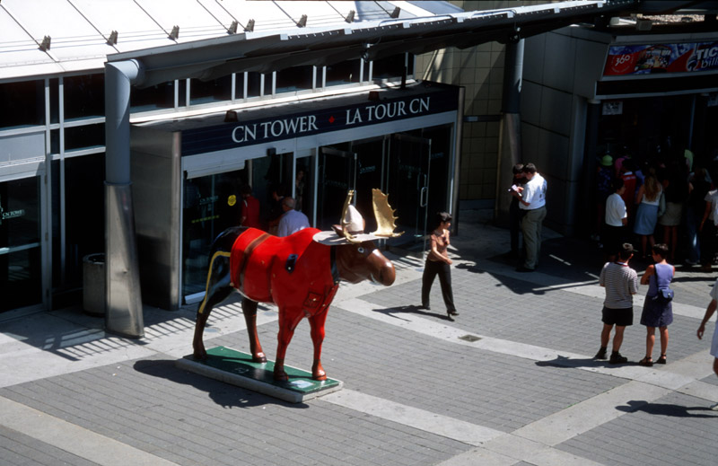 Moose in the City (Elche)