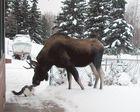 Moose und Fluffy