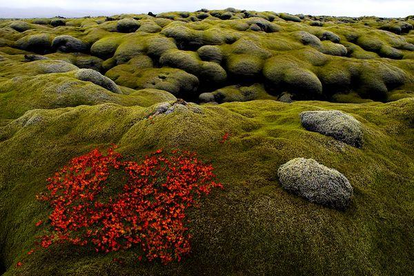 Moosfeld über der Lava / Island Südküste