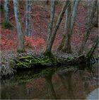 Moosgrün und Herbstrot