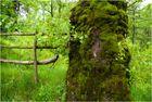 Moosiger Baum
