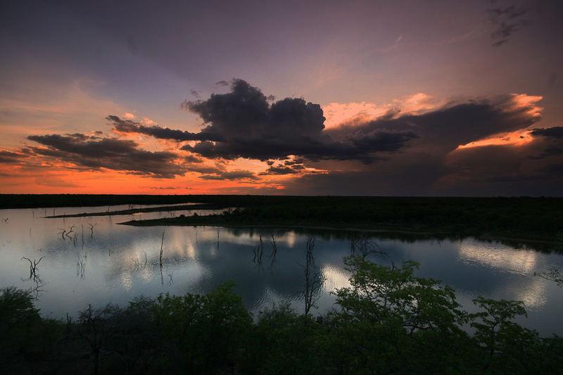 Mopani Sunset