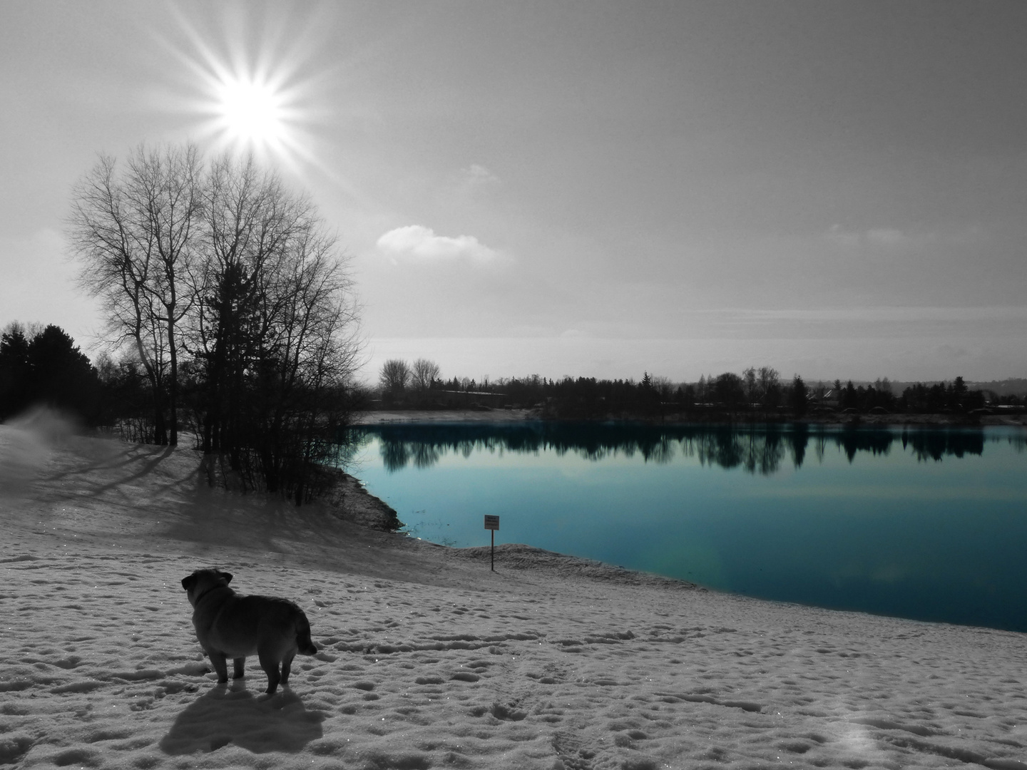 Mops am See