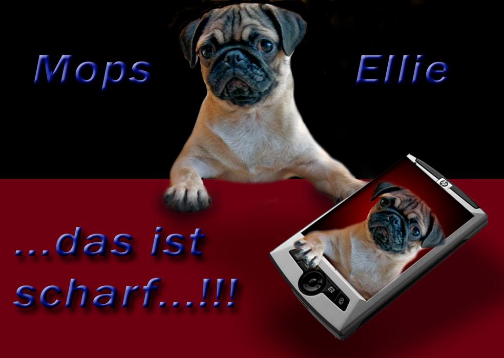 ...Mops Ellie...