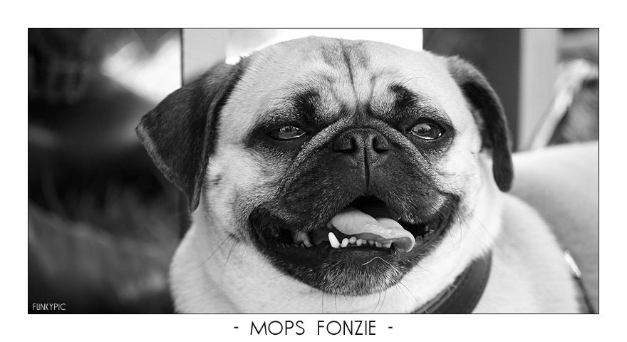 Mops Fonzie