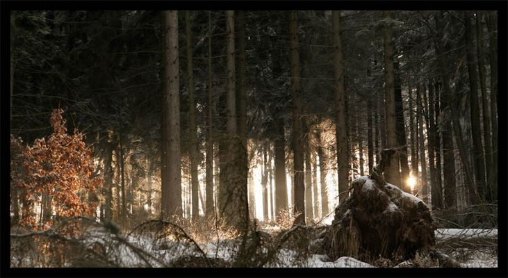 Mopsfledermauswald