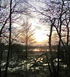 Morastiges Ufer