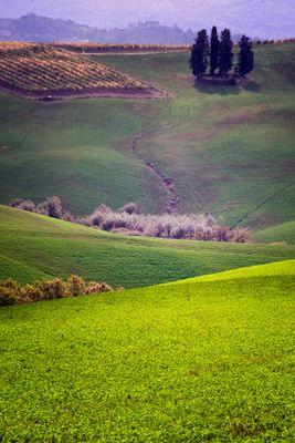 Morbide colline