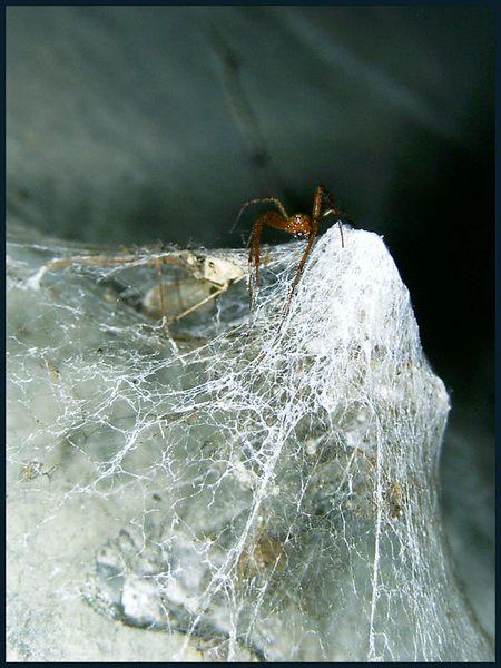 Mordlustige Spinne umgeben von ihren Opfern