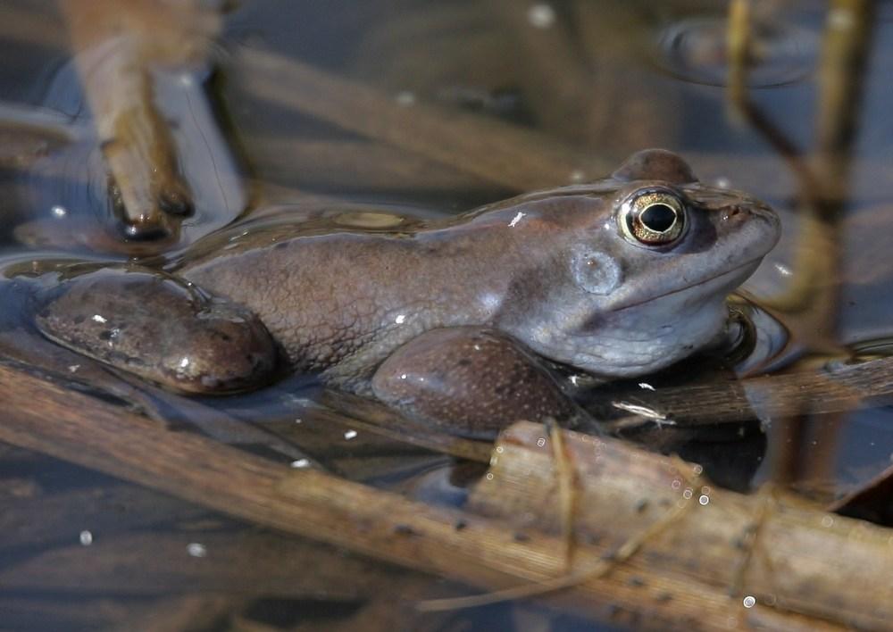 More Frosch