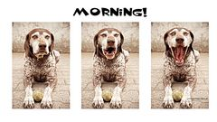 morgähn!