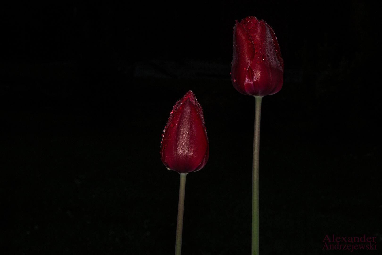 Morgähntau