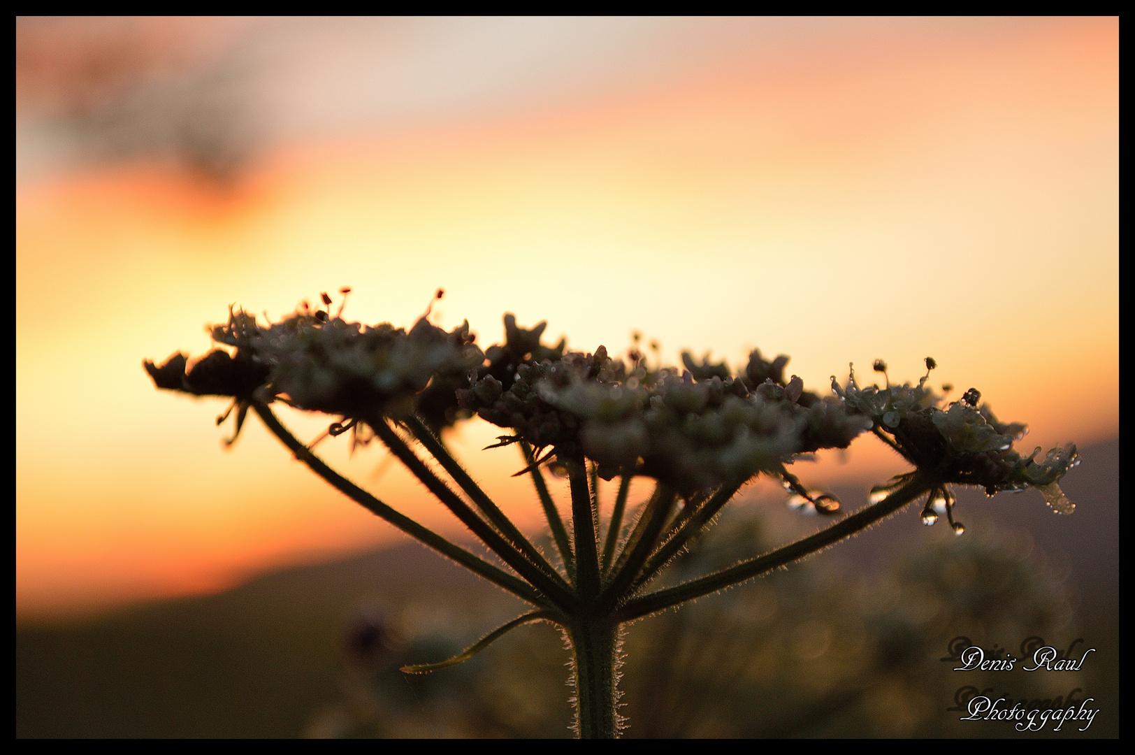 Morgen Blüte