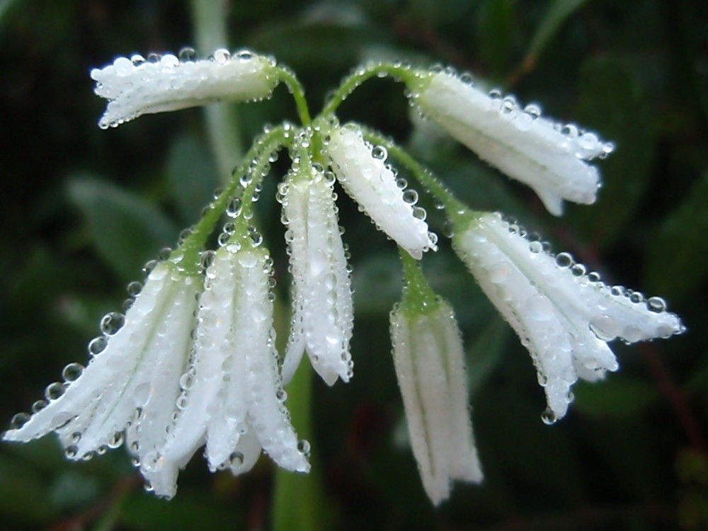 morgen Blume in Port Mahon