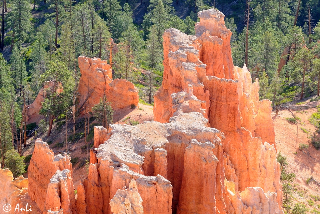 Morgen im Bryce Canyon