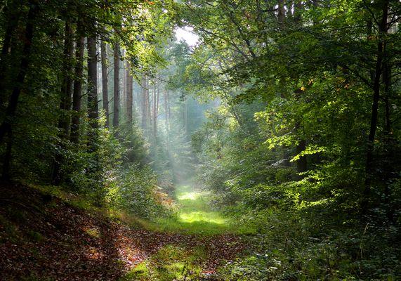 Morgen im Kellerswald1