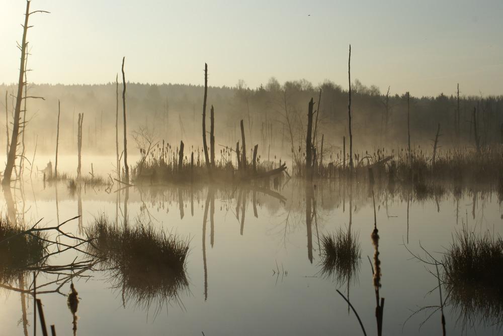 Morgen im Moor