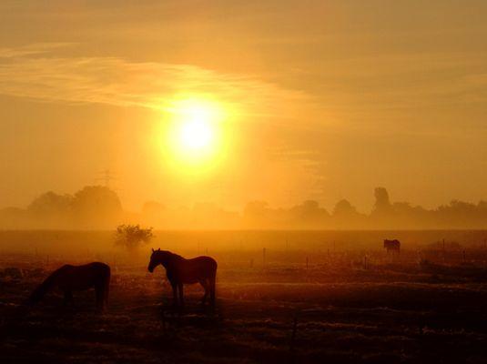 Morgen mit Pferden