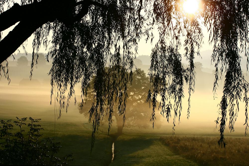 Morgen Nebel