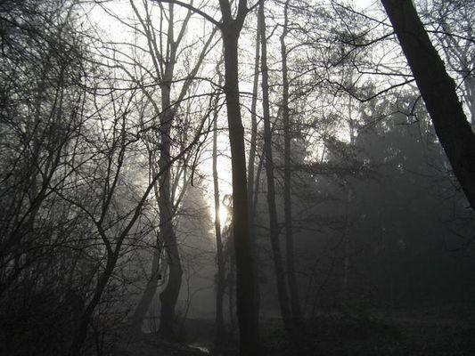 Morgen, Nebel, Sonne...Frühling?