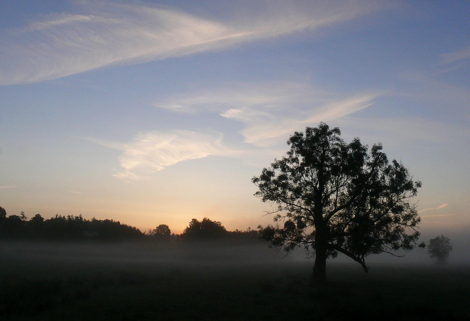 Morgen-Nebel-Stimmung