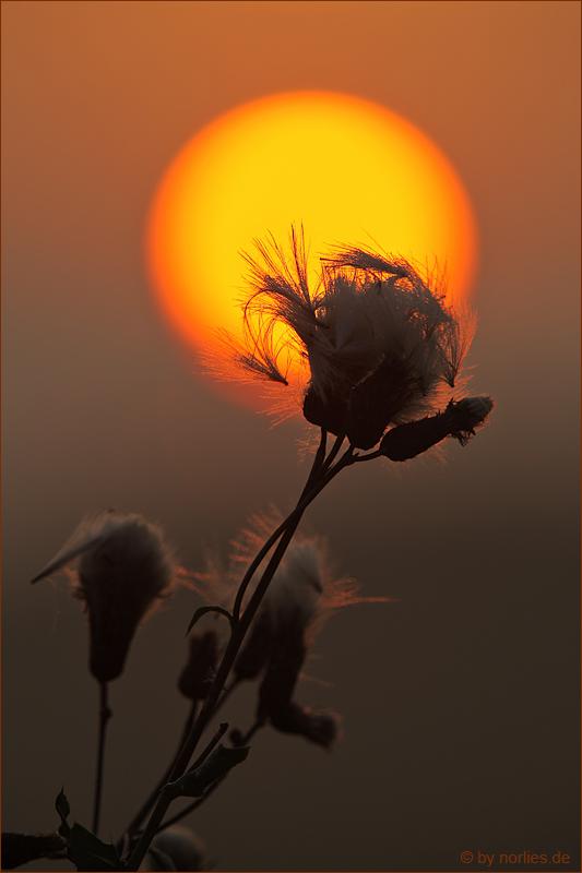 Morgenblüten