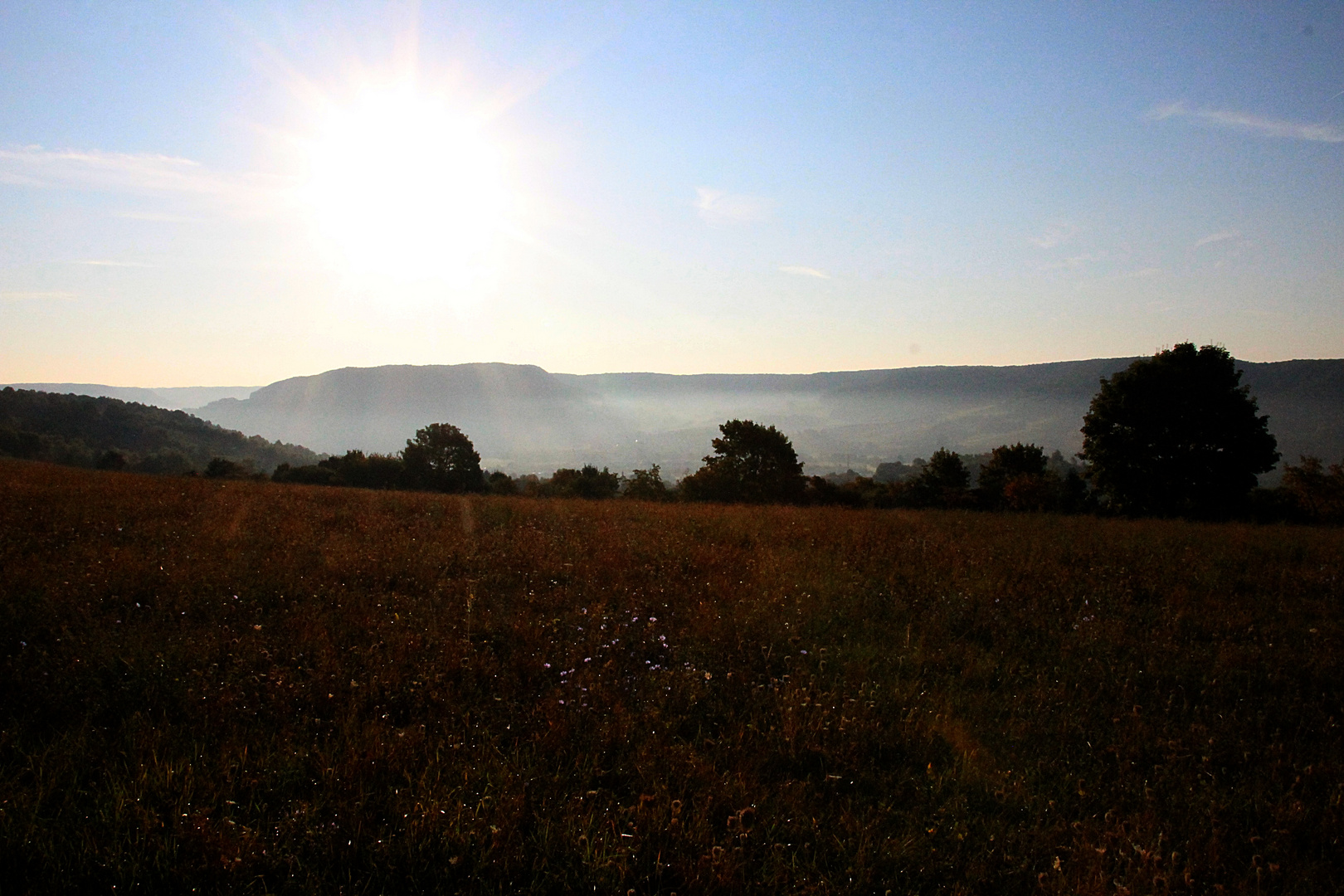 Morgendliche Herbstwiese am Saaletal bei Jena