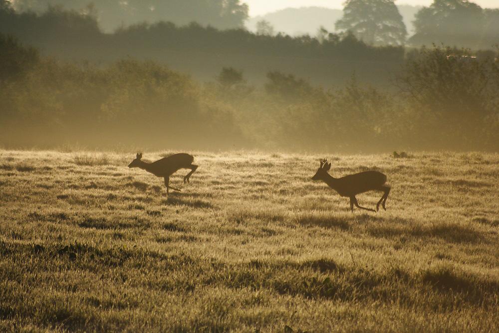 Morgendliche Jagd