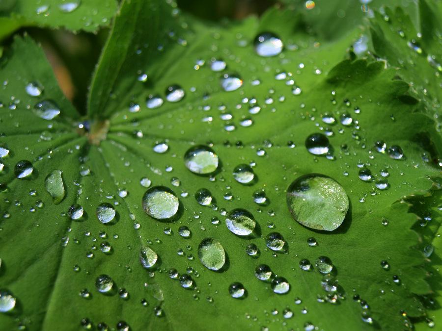 Morgendliche Regentropfen