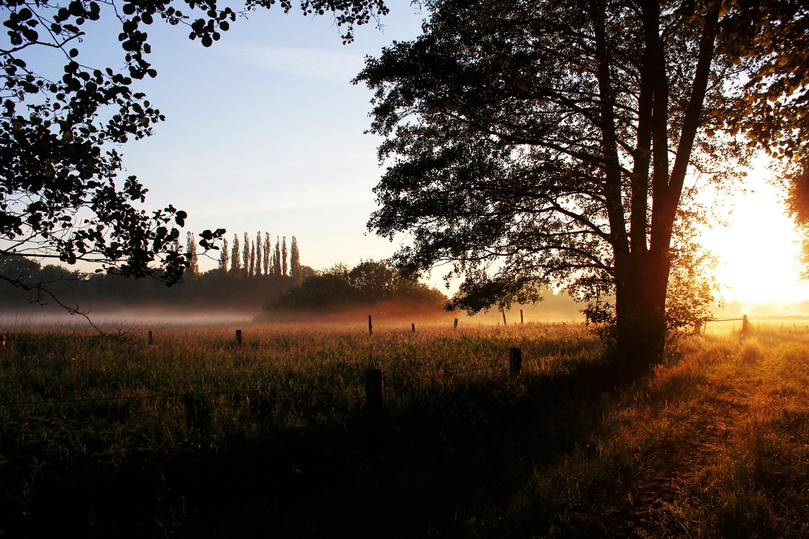 Morgendliche Stille