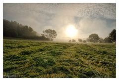 Morgendlicher Blick über das Feld....