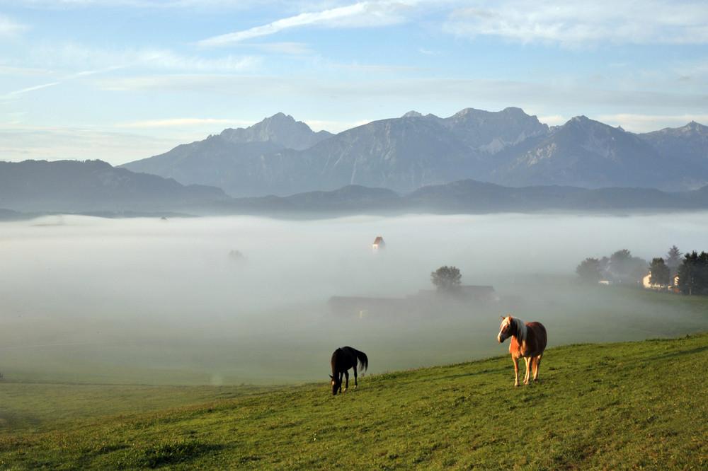 Morgendlicher Nebel im Allgäu