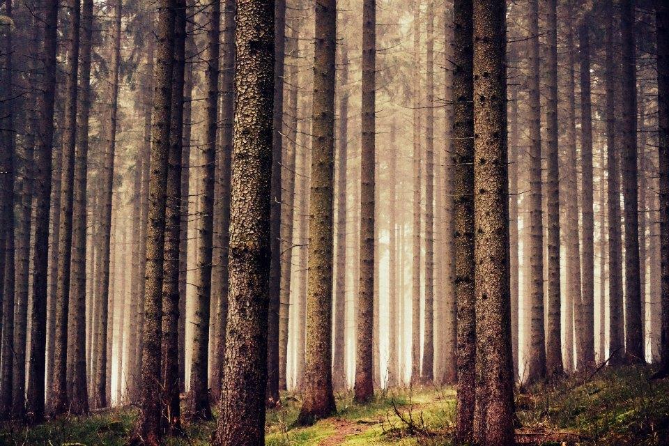 Morgendlicher Wald