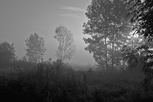 morgendlicher Waldschimmer