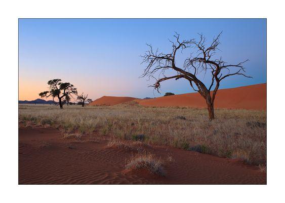 Morgenerwachen in der Wüste Namib