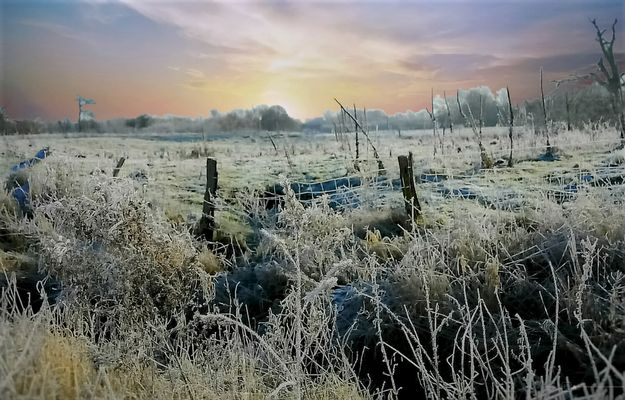 * Morgenfrost *